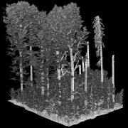 Beech forest in the Southwest Czech Republic